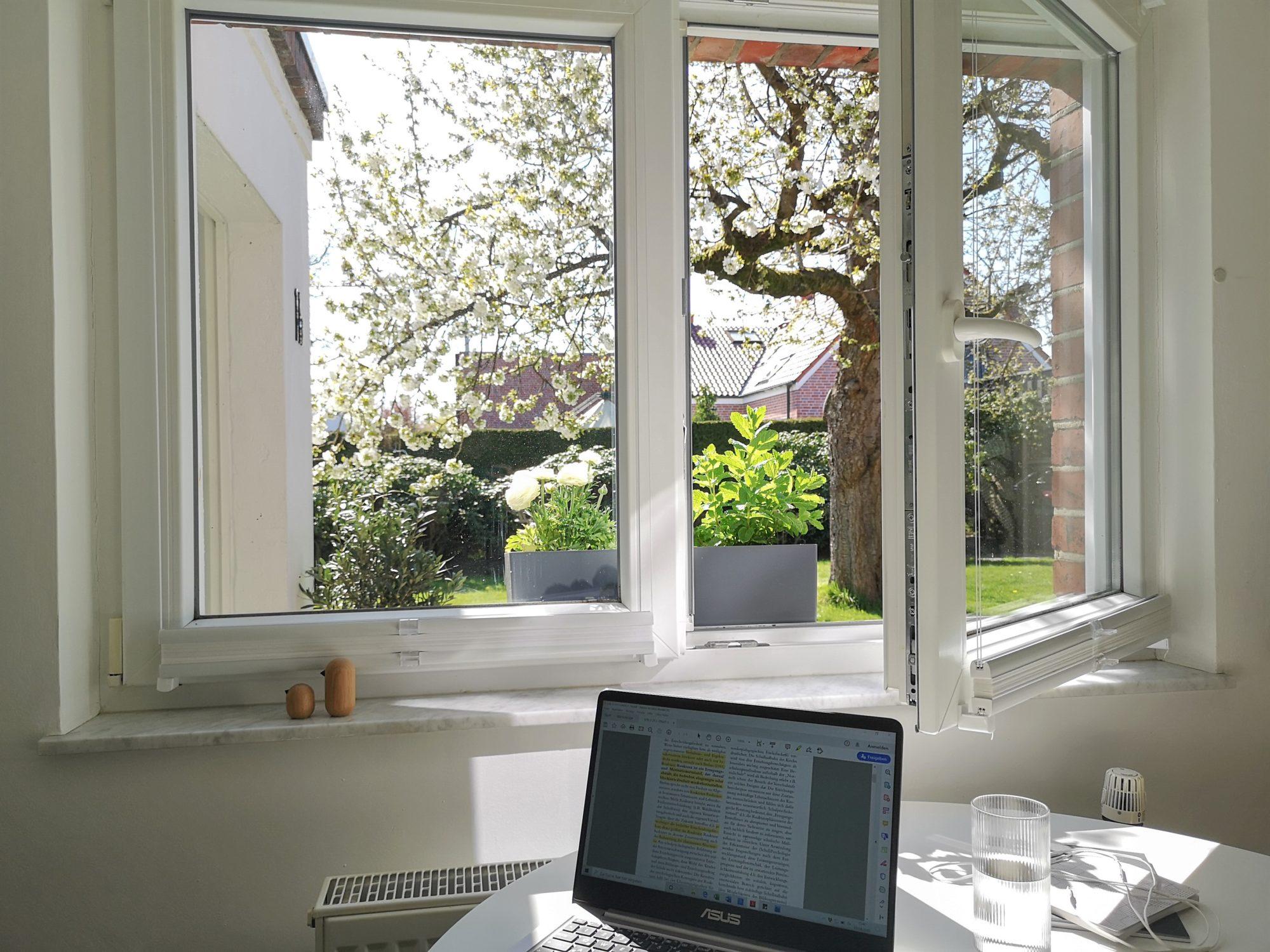 Blick aus dem Fenster - Aussicht auf den Garten mit Kirschbaum