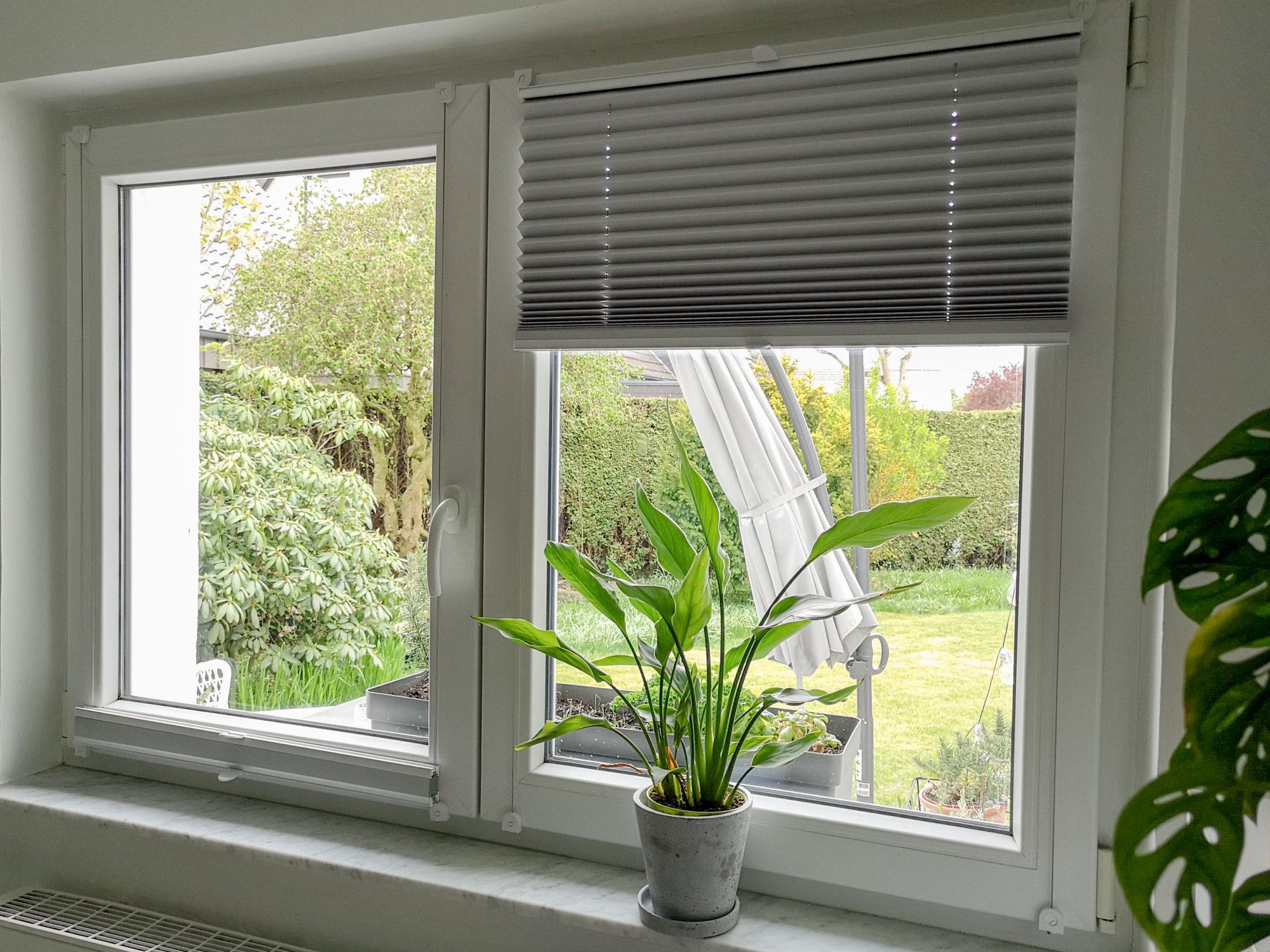 Ausblick aus dem Fenster mit Blick in den Garten